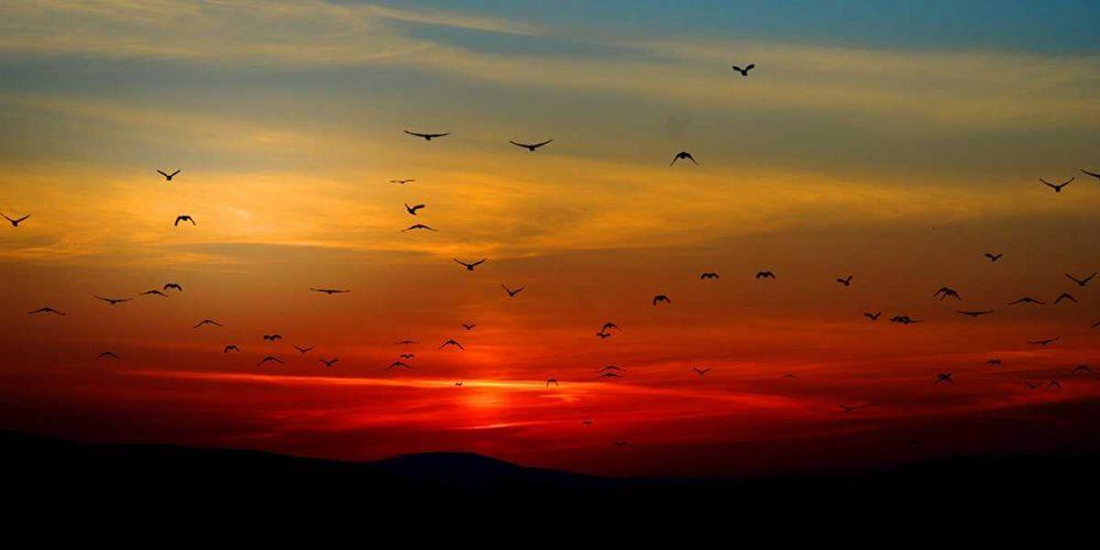 Kuşların Günlük İbadet Vakitleri